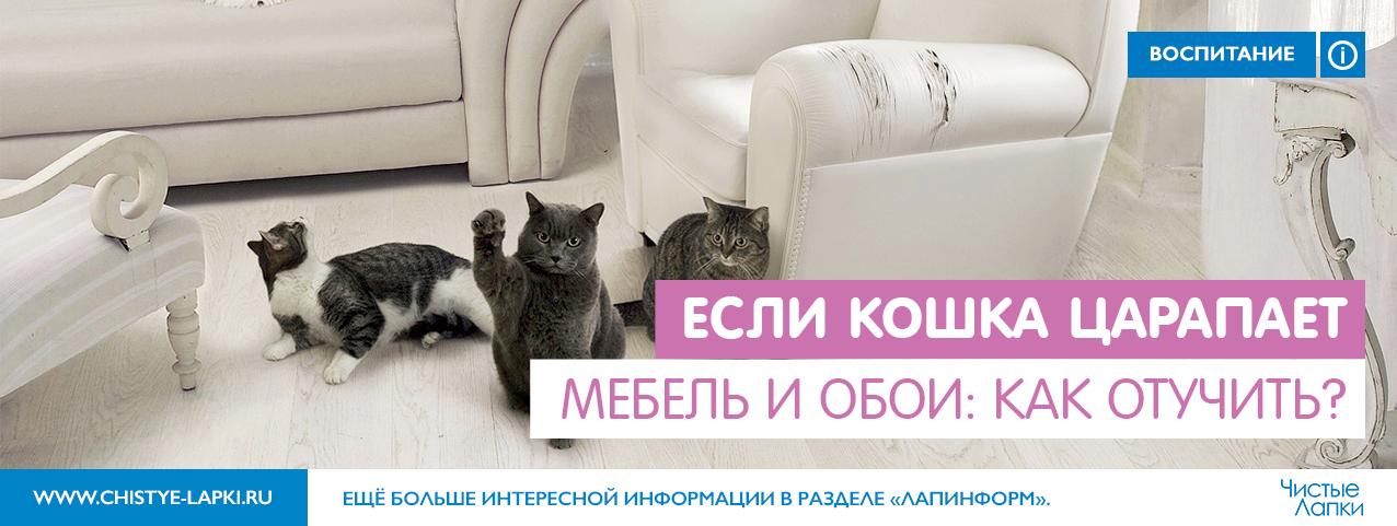 Как сделать чтобы кошка не драла диван