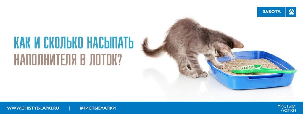 Корм Brit для кошек: описание, отзывы владельцев, ветеринаров